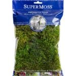 Forest_Moss_Preserved_Fresh_Green_2oz_Bag_25320_HERO