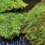 Mood-Moss_Preserved_LIFESTYLE01
