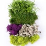 Moss_Mix_Assorted_Best_Sellers_INDEX