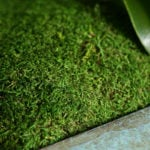 Sheet-Moss_Preserved_LIFESTYLE02