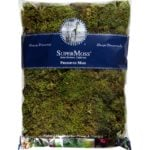 Sheet_Moss_Petite_Preserved_Fresh_Green_16oz_Bag_21746